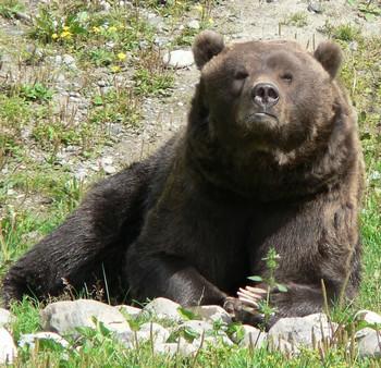 L'ours booba venu d'alaska