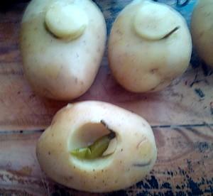pommes de terre piégèes