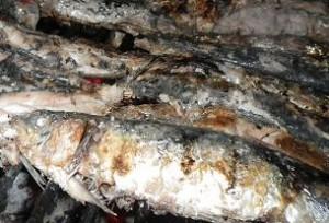 sardines grillées au barbecue