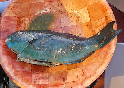 poisson perroquet avant cuisson