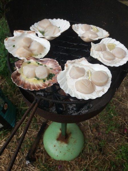 cuisson des noix de saint jacques